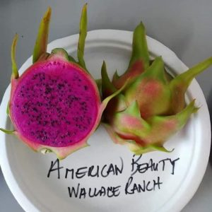 Pitaya American Beauty