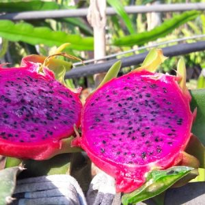 Pitaya Physical Graffiti